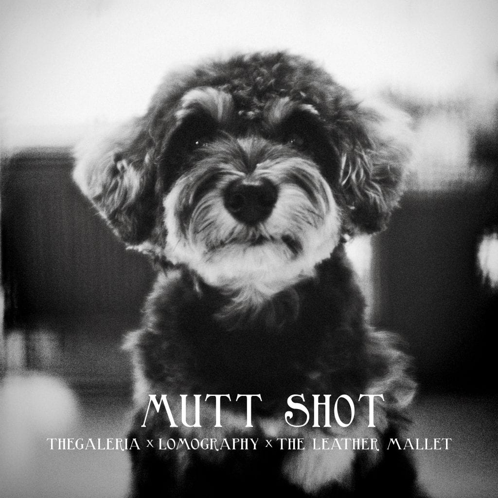 Mutt Shot / A Dog Portrait Photography Session